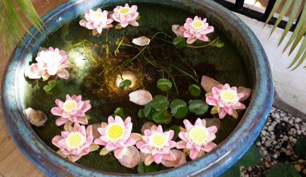 Siem Reap Lotus